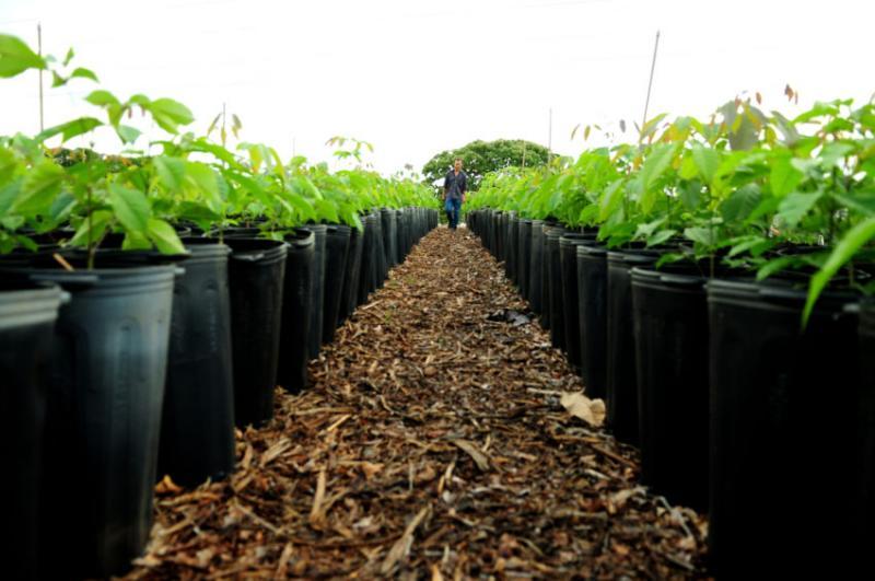 Municípios poderão ter mais recursos para arborização urbana
