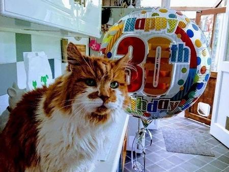 Gato mais velho do mundo morre aos 31 anos de idade