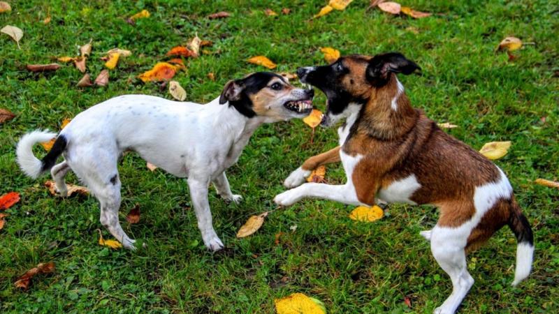 Briga entre cães: como separar e evitar que aconteça