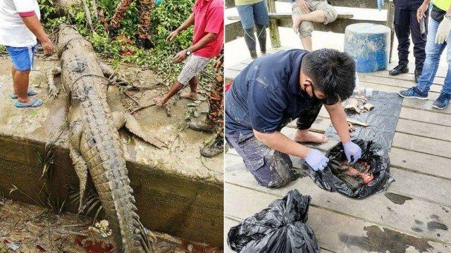 Restos mortais de adolescente são achados dentro de crocodilo