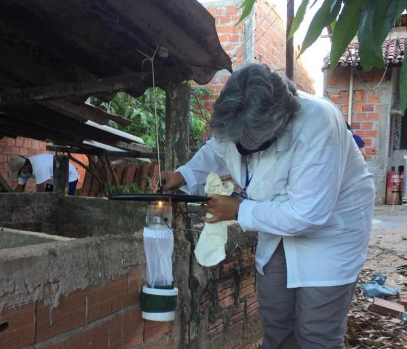 Teresina registra 2º caso de Febre do Nilo Ocidental
