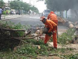 SDU retira árvores caídas após fortes chuvas em Teresina