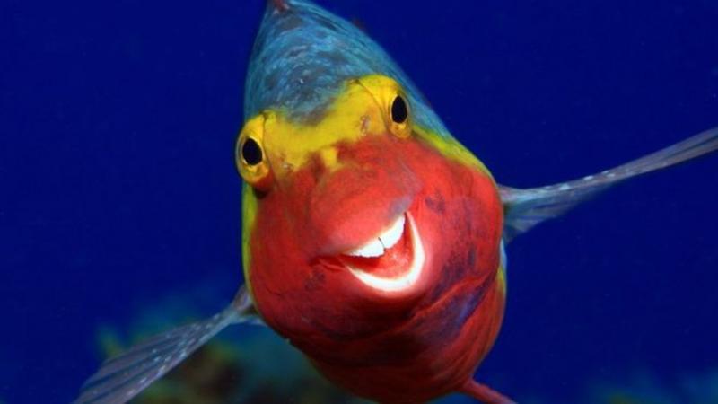 Concurso de Pet: veja o peixe sorridente, gorila 'entediado' e outros finalistas