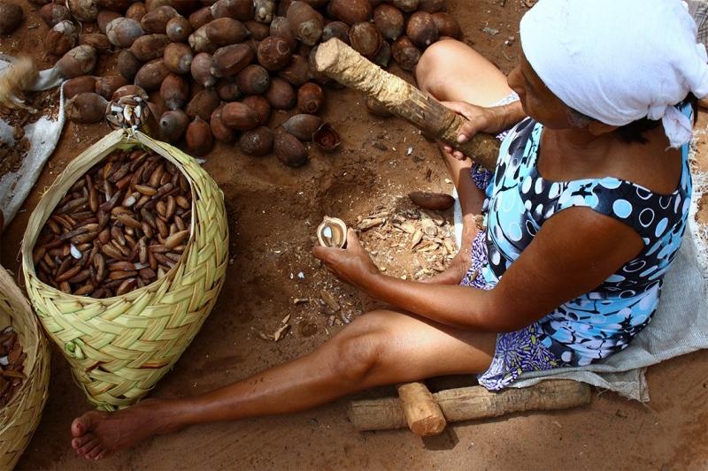 Mulheres que geram renda com babaçu em Cabeceiras são destaques em rede nacional