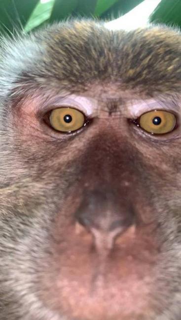 Selfies de macaco após furtar smartphone - Foto: Reprodução/Facebook (Zackrydz Rodzi)