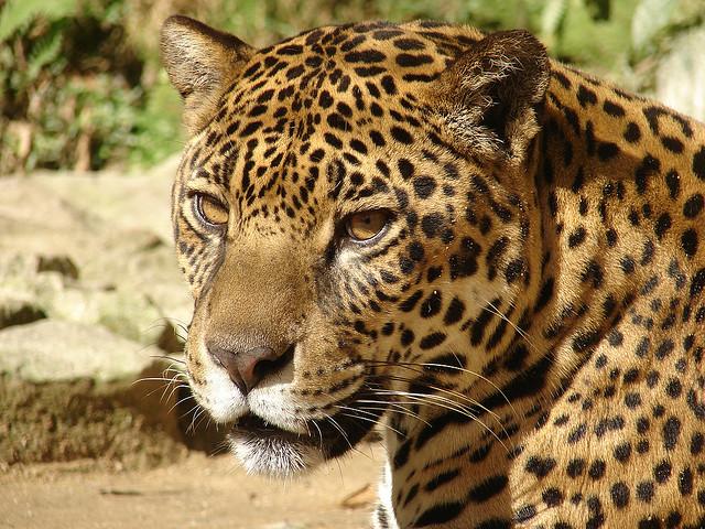 Atragédia no Pantanal e na Amazônia