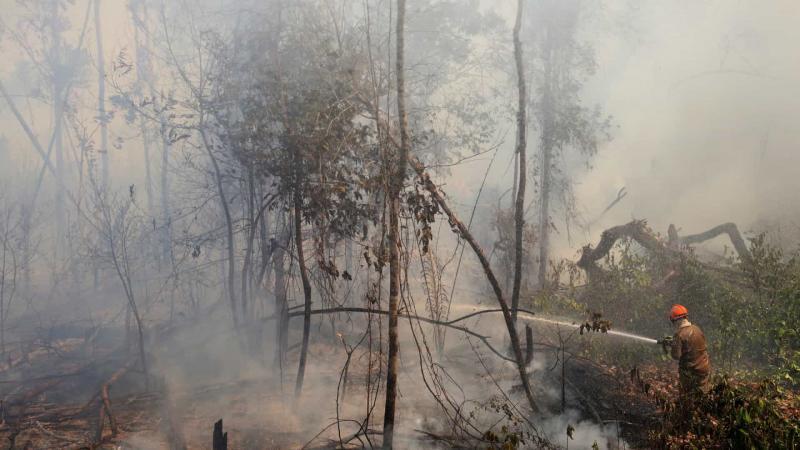 PT acusa 'omissão' e quer obrigar governo a adotar medidas contra incêndios