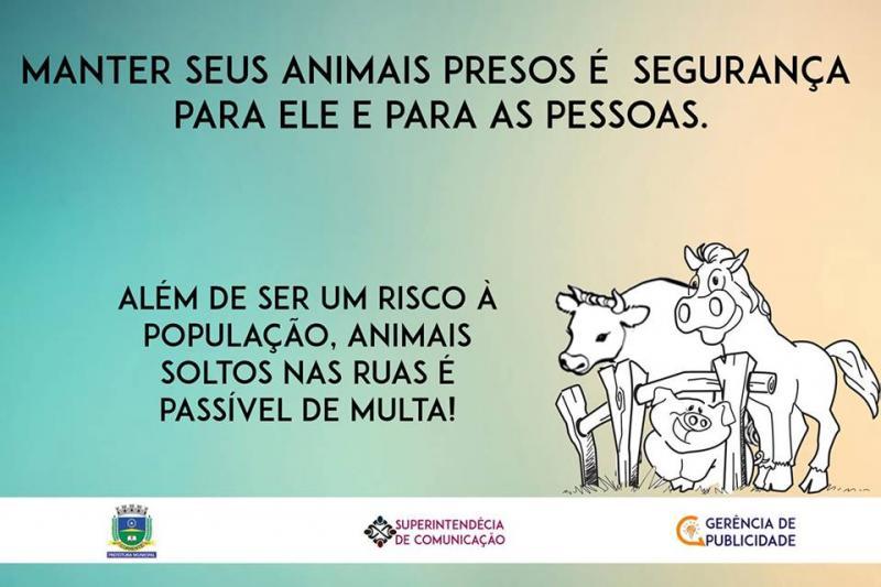 Prefeitura intensifica fiscalização de animais soltos em vias públicas