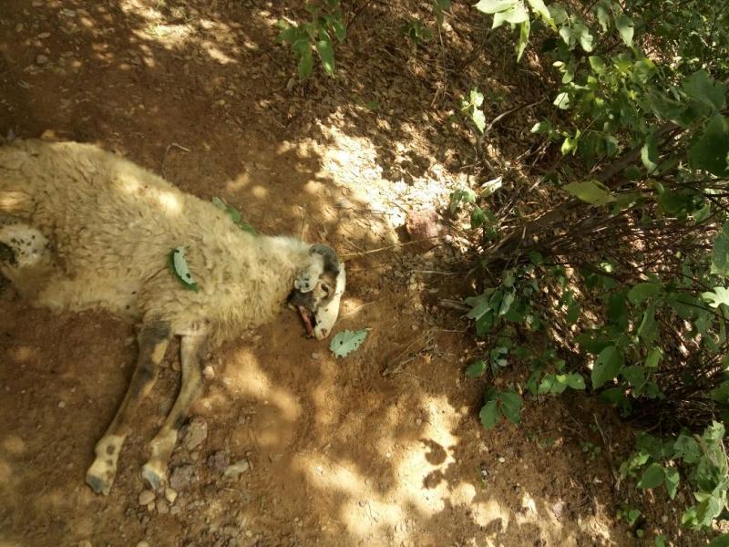 Polícia Militar prende homem acusado de furtar animais no Piauí