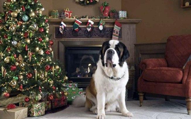 Veja 5 filmes natalinos com cãezinhos para assistir com a família