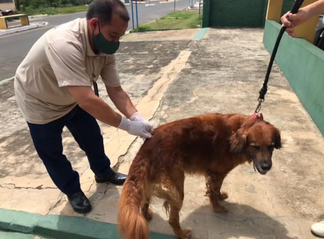 Lagoinha do Piauí teve Dia D da vacinação antirrábica