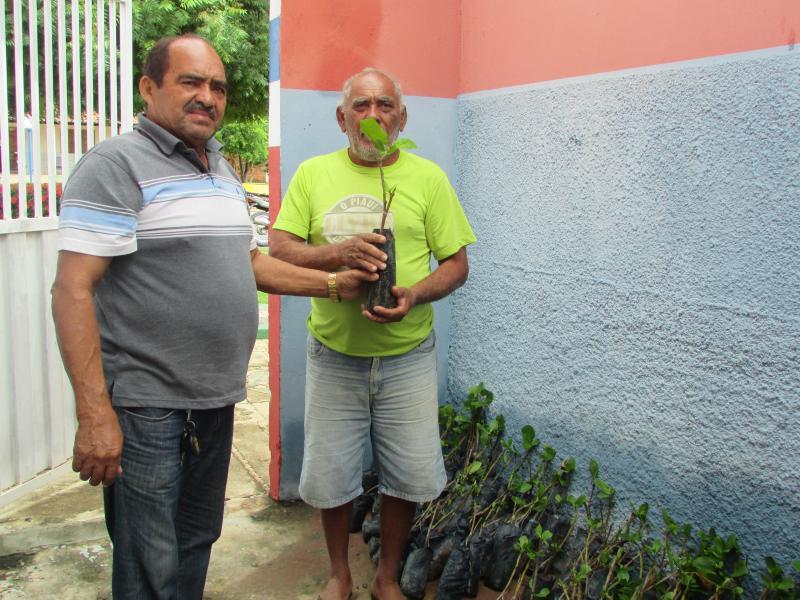 Prefeitura municipal de Lagoinha do  piauí realiza entrega de mais de 500 mudas de cajueiro-anão