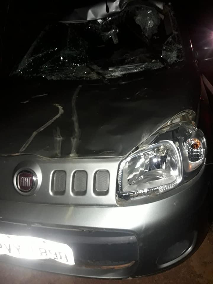 Motorista colide com cavalo na MA-270 próximo de Sucupira do Norte