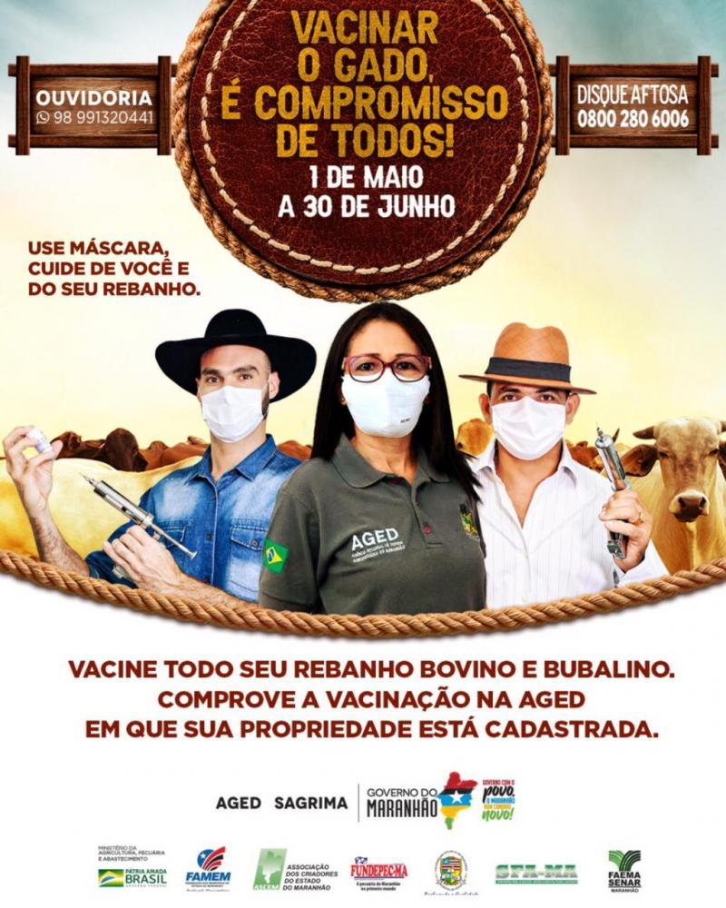 Iniciada Primeira Etapa de Vacinação Contra Febre Aftosa no MA