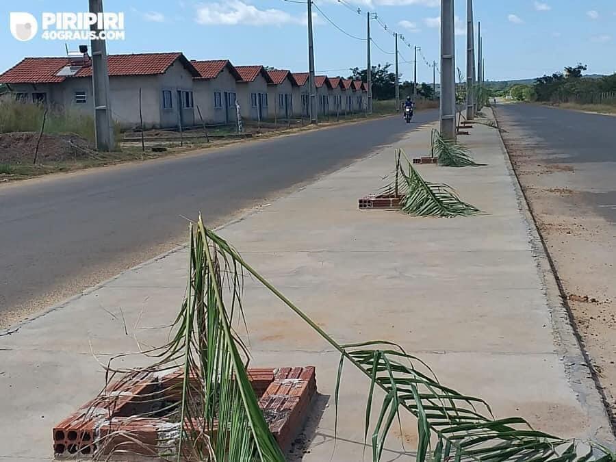 Após vandalismo, prefeitura de Piripiri inicia arborização de avenida