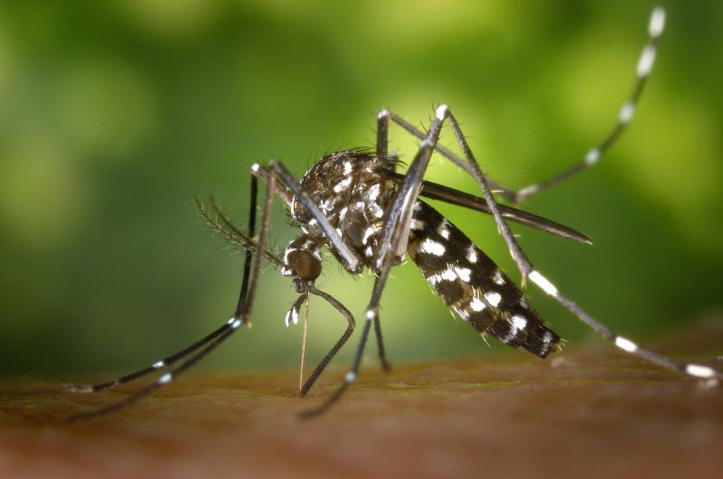 Casos de Chikungunya diminuem 72,2% no Piauí