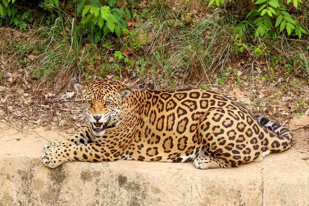 Semar do Piauí vai esvaziar Zoobotânico e libertar animais do parque