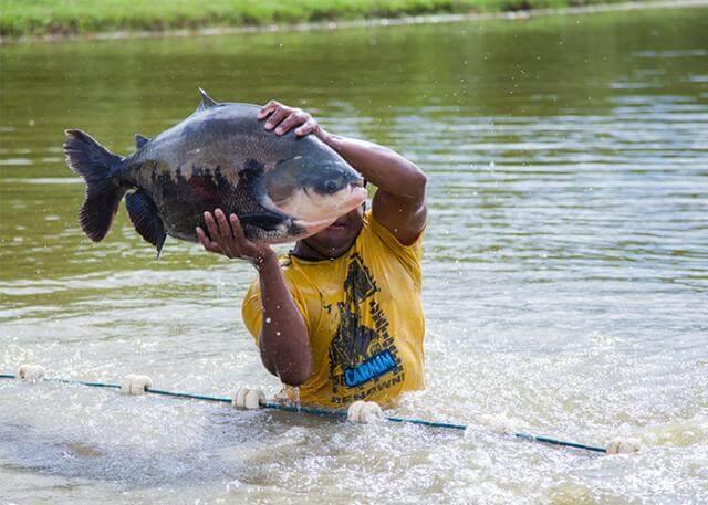 Piauí produzirá 20 mil toneladas de peixes este ano, diz dados da Associação de Piscicultura