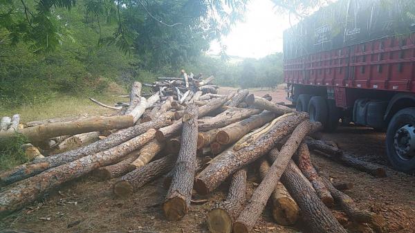 IBAMA realiza em conjunto com a SMMA de Landri Sales a apreensão de carga de madeira ilegal