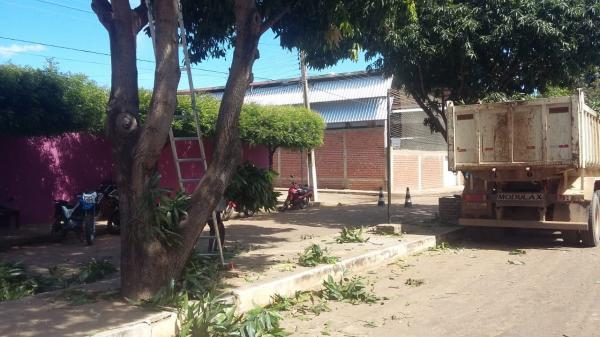 Serviços de poda são iniciados no centro da cidade de Valença e nos demais bairros da cidade