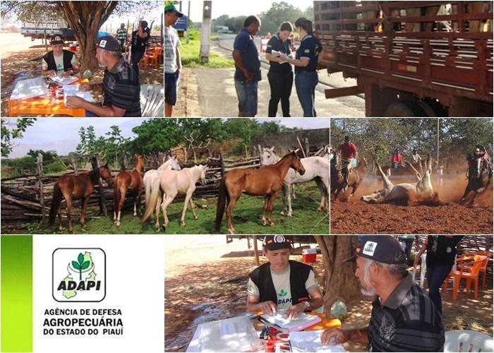 Vaquejadas e corridas de prado no Extremo Sul do Piauí serão fiscalizadas pela ADAPI