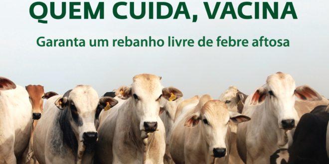 Vacinação contra febre aftosa tem prazo prorrogado pela ADAPI
