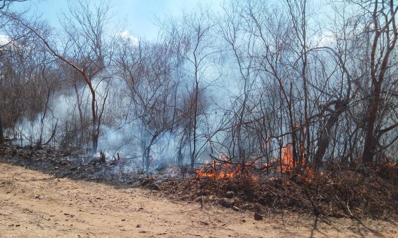 Incêndio no interior do Piauí já dura cerca de 20 dias e destrói vegetação